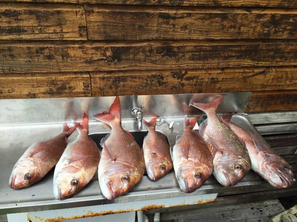 FishStation